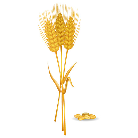 Wheat Ears near Grain pile Isolated on White Illustration