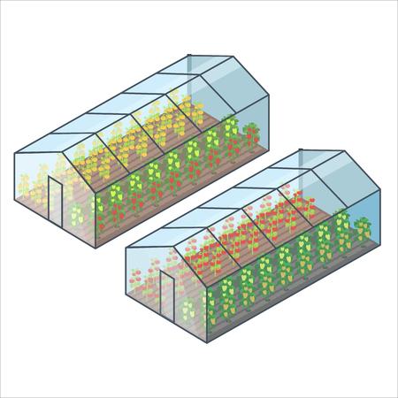 Große transparente Gewächshäuser mit Gemüsebeeten