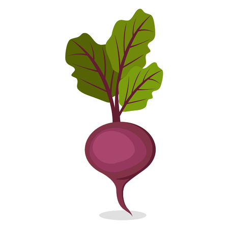 Organic Sweet beet from Farm Isolated Illustration