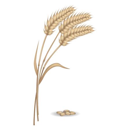 rye: Harvest of Rye Ears near Pile of Grains Vector Poster