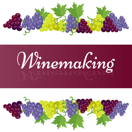Cartel de plantilla de vinificación con racimos de uva Foto de archivo - 88774582