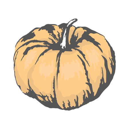 Sweet ripe organic pumpkin with small tail isolated sketch on white background. Delicious healthy gourd plant vector illustration. Illustration