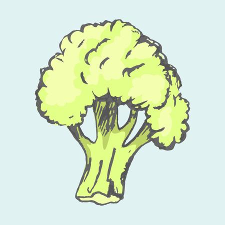 大きな緑のブロッコリー野菜は、明るい青の背景に分離します。多くのビタミンを持つ季節のキャベツの種類のベクトル クローズ アップ ポスター