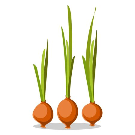 Three Old Onions with Long Green Leaves Poster