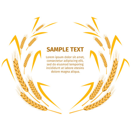 Wheat Ears around Your Text Sample on White Illustration