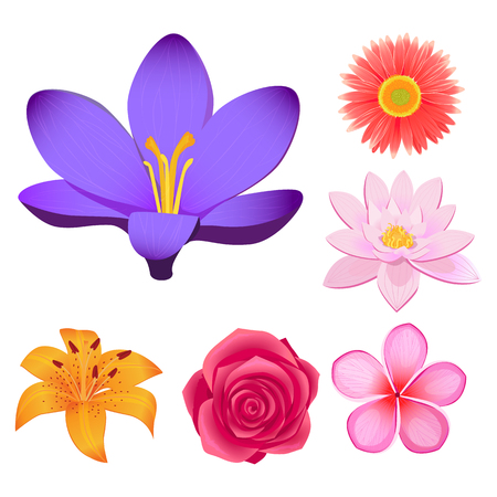 Gorgeous Flower Buds Isolated ilustraciones conjunto Ilustración de vector