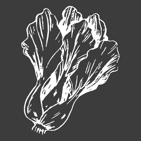 Leafy Chinese Cabbage Head Isolated White Outline Banco de Imagens - 88835383