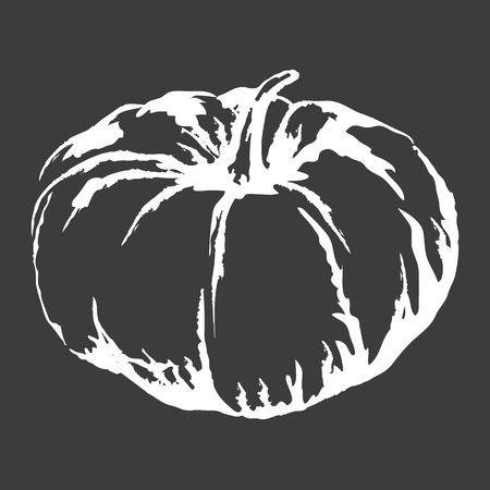 Big Ripe Pumpkin Isolated White Outline Sketch