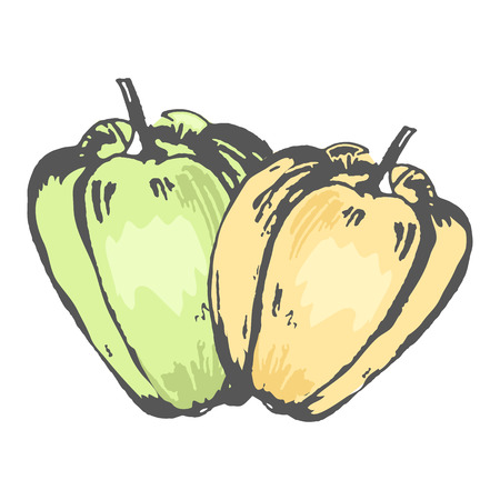 Green and Orange Sweet Peppers Isolated Sketch