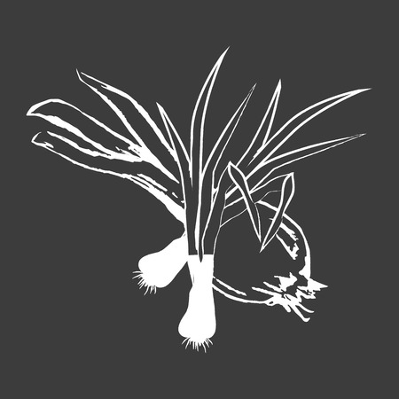 Leek Bunches and Bulb Onion Isolated White Outline Ilustração