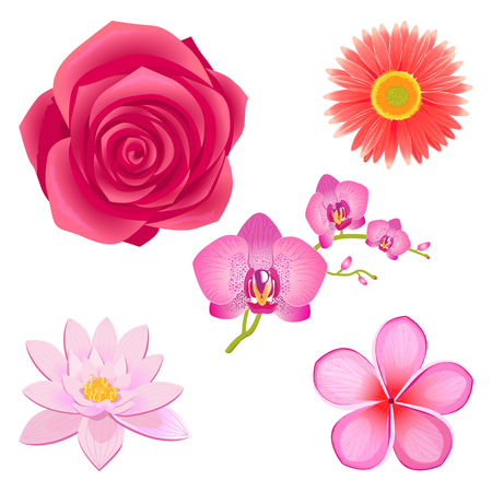 Amazing Pink Flowers Isolated Illustrations Set Illustration