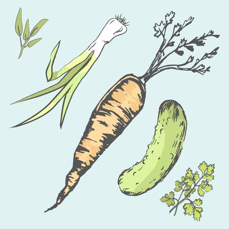 シャキッとしたにんじん、緑のキュウリ、新鮮な野菜 写真素材