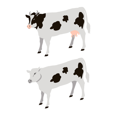 White Cows with Black Sports Vector Illustration Stock Vector - 88839321