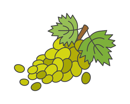 Branch of Green Grapes Flat Vector Icon Illustration