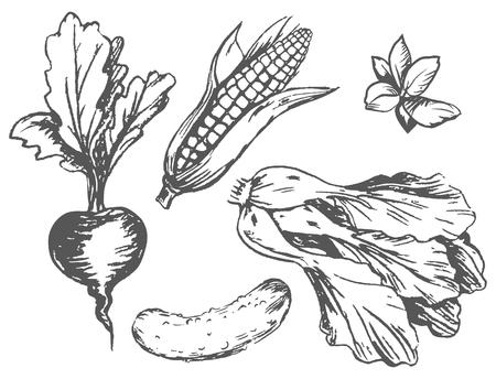 白地ランダムに無色のグラフィック野菜