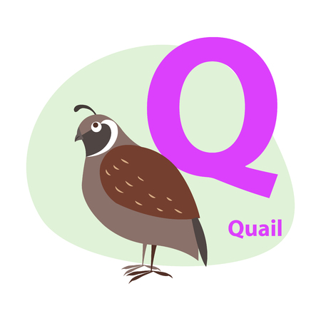ABC Letter with cute quail cartoon vector illustration