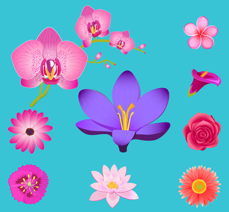 Flower Collection Isolated on Azure Background