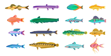 Different varieties of Sea and Freshwater Fishes with Bright Scales Reklamní fotografie - 90668089