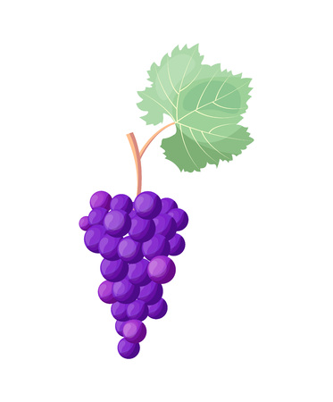 Wine Grapes Icon Vector Illustration on White