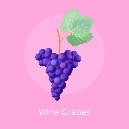 Icono de uvas de vino, ilustración vectorial en rosa Foto de archivo - 90317170