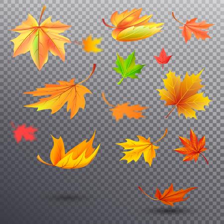 Bright Autumn Fallen Maple Leaves Illustrations