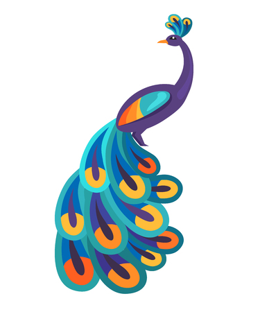Peacock with Bright Feathers Isolated Illustration