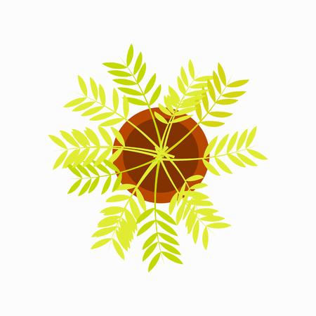 Indoor Flower in Brown Pot Vector Illustration