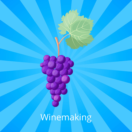 Winemaking process visualization with bunch of ripe purple grape with huge green leaf. Vector illustration with icon of berries on blue background