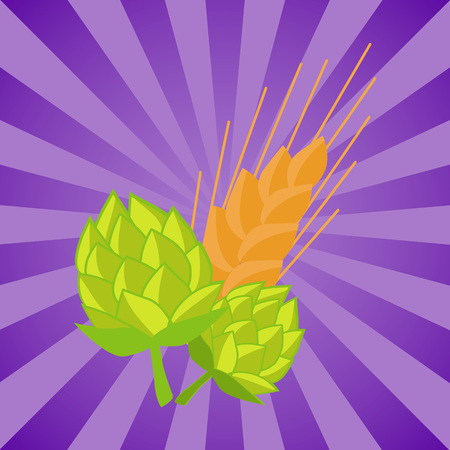Green hop and golden ears of wheat vector illustrations isolated on rays. Plants cultivated for use by brewing industry, flavor ingredients in beer Illustration