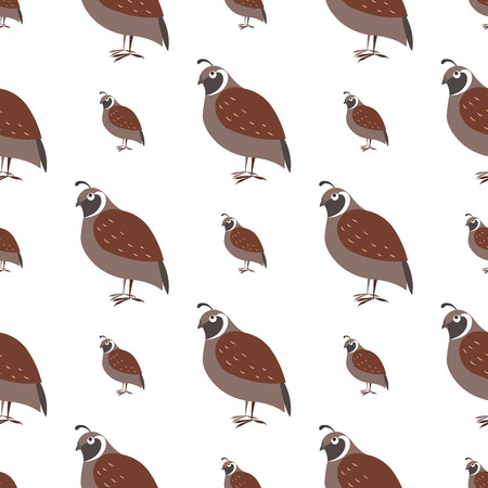 Cartoon Quail Seamless Pattern on White Vector