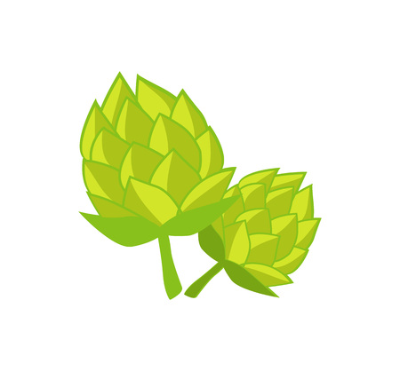Green Humulus Hop Vector Illustration Isolated Illustration