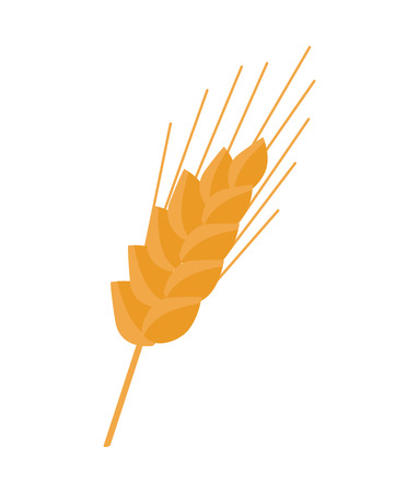 귀 곡물 보유 팁 곡물 식물의 줄기 부분 일러스트