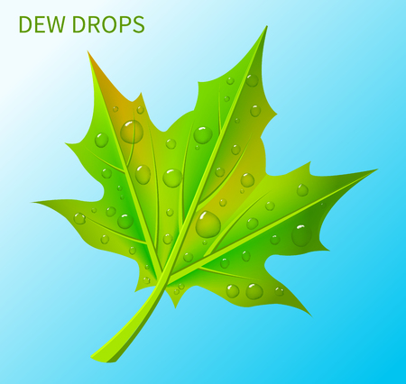 Dew Drops on Green Leaf Vector Illustration