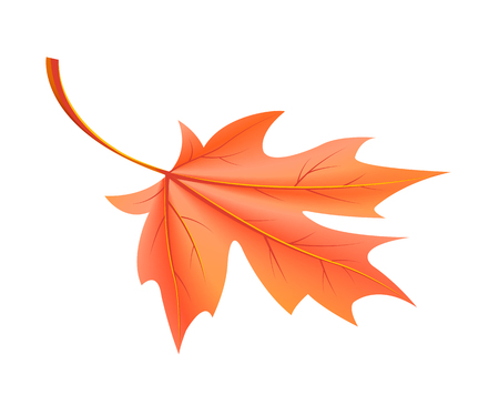 Red Autumn Leaf Fallen from Maple Tree Vector