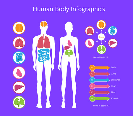 Human Body Infographic on Vector Illustration Illustration