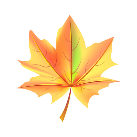 Leaf Orange and Green Color Autumn Fallen Object