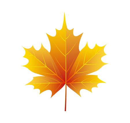 Autumn Golden Yellow Leaf Vector Illustration Logo Çizim