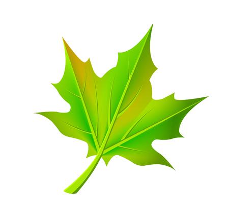 Green Autumn Leaf Fallen from Maple Tree Vector Illustration