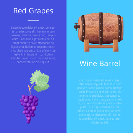 Red Grapes and Wine Barrel Vector Illustration 向量圖像