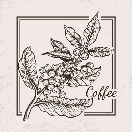 Coffee Berries Twig Icon Vector Illustration Banco de Imagens - 90787013