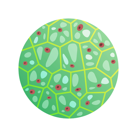 Round green cell with microorganisms vector illustration in biology and microbiology concepts. Icon of molecular jointment under microscope Illustration