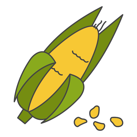 Corn Cob in Husk Flat Vector Icon Çizim
