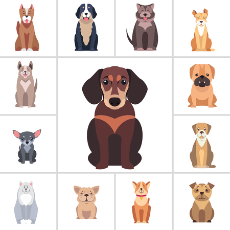 Dachshund in center and other dog breeds as frame isolated on white background. Vector illustrations of quadruped humans friends. Hunting, protection and decorative species from all over world.