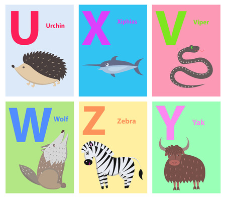 Alphabet set of six letters U X V W Z Y with wild animals. Vector illustration of barbed urchin, sharp-nosed xiphias, black viper, howling wolf, striped zebra, brown yak color teaching cards.
