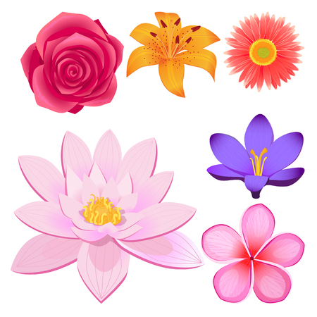Gorgeous Flower Buds Isolated illustrations set Illustration