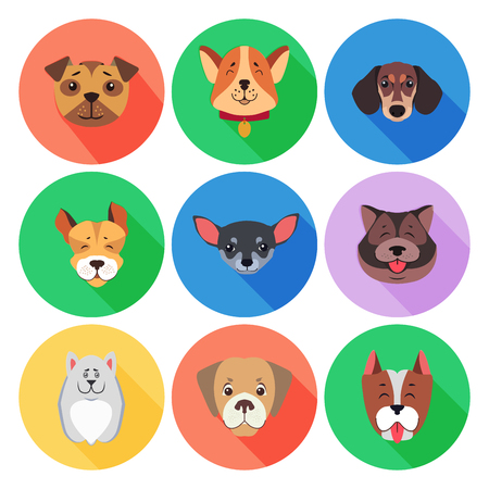 Set of purebred dogs. Vector illustration of Akita-inu and Chihuahua, Tibetan Mastiff, Boxer Dog and Dachshund, Jack Russell Terrier, Retriever and Staffordshire Terrier, Puppy of Argentinian Dog. Ilustração