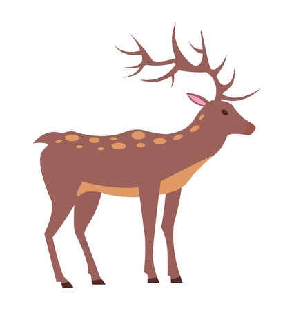 Medium-sized adult male deer with spotted fur, long antlers and short tail isolated vector illustration on white background, view from Left
