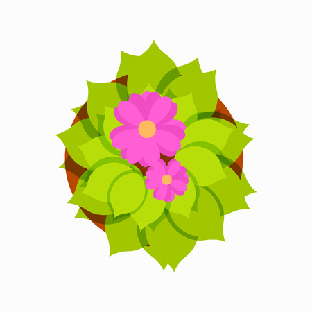 Top view of blooming pink flower with lots of green leaves in brown pot. Vector illustration of home plant isolated on white background