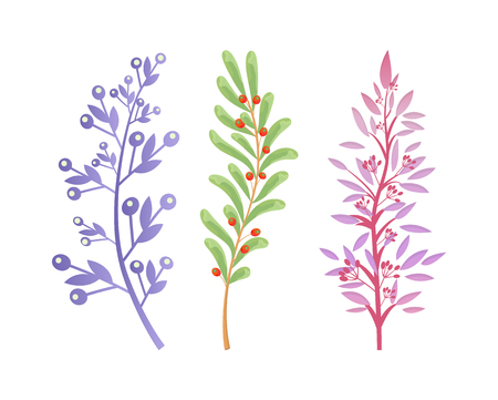 Branches of Forest Trees and Bushes with Berries