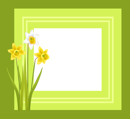 Greeting card with framing daffodil narcissus bulbous illustration.